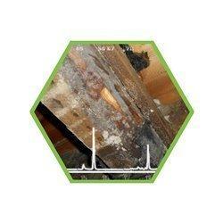 Gebäudezerstörende Pilze (u.A. Hausschwamm)