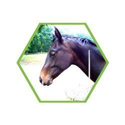 Tierartennachweis: Eine Spezies (Pferd/Schwein/Rind/Fisch/ etc. )
