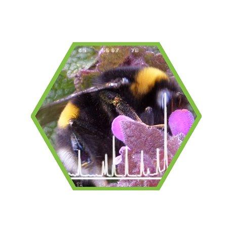 Laboranalysen: Honig, häufig verwendete Substanzen in der Imkerei