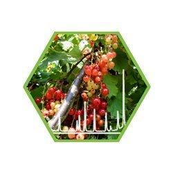 Pestizide in Lebensmitteln (Screening auf ca. 650 Verbindungen)
