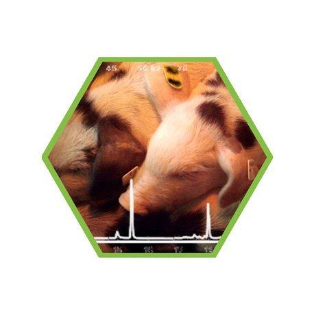 Tierartennachweis: Schwein in Lebensmitteln und Futtermitteln