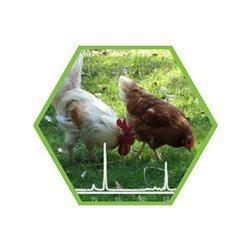 Fipronil in Eier,  Eiprodukten und Fleisch