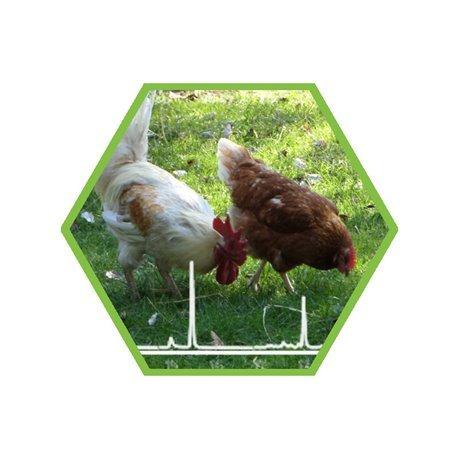 Fipronil wirkt gegen saugende Insekten, wie Flöhe, Milben, Zecken.