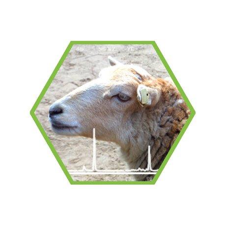 Tierartennachweis Schaf in Lebensmittel und Futtermittel