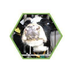 Tierartennachweis Rind in Lebensmitteln und Futtermitteln