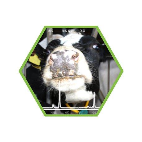 Tierartennachweis Rind in Lebensmittel und Futtermittel