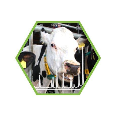 Tierartennachweis Schwein/Rind/Pferd/Schaf/Ziege in Lebensmittel und Futtermittel