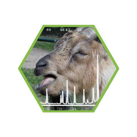 Tierartennachweis Ziege in Lebensmittel und Futtermittel