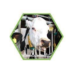 Tierartennachweis: Schwein/Pferd/Rind in Lebensmitteln und Futtermitteln