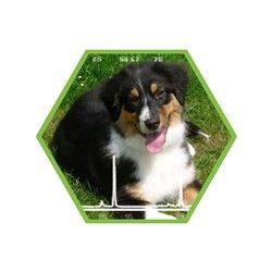 Tierartennachweis Hund in Lebensmitteln und Futtermitteln