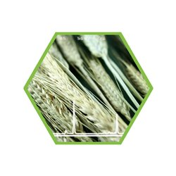 Schimmelpilzgift (Mycotoxin) T2/HT2 Sum