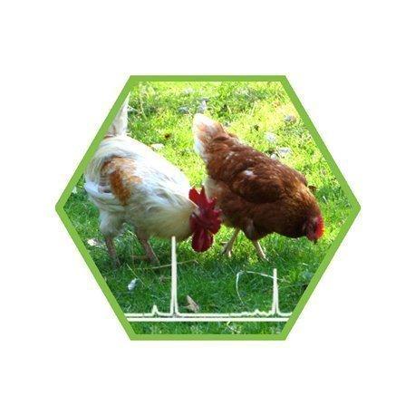 Tierartennachweis Huhn/Truthahn in Lebensmittel und Futtermittel