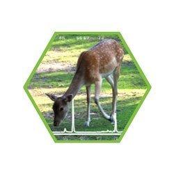Tierartennachweis Wiederkäuer in Lebensmitteln und Futtermitteln
