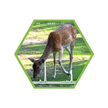Tierartennachweis Wiederkäuer in Lebensmittel und Futtermittel