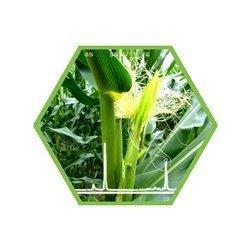Biogasanalytik
