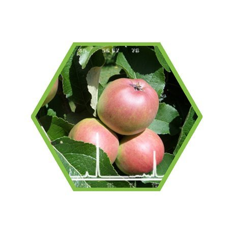 Pestizide in Obst und Gemüse (Screening ca. 700 Verbindungen)
