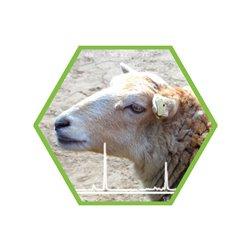 Tierartennachweis Schaf in Lebensmitteln und Futtermitteln