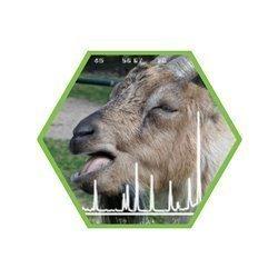 Tierartennachweis Ziege in Lebensmitteln und Futtermitteln