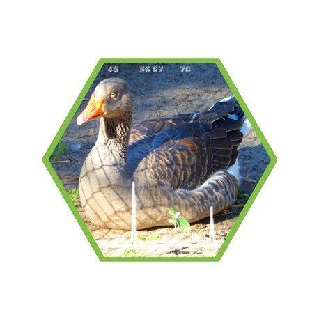 Tierartennachweis Ente/Gans in Lebensmittel und Futtermittel