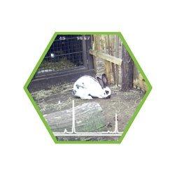 Tierartennachweis Kaninchen in Lebensmitteln und Futtermitteln