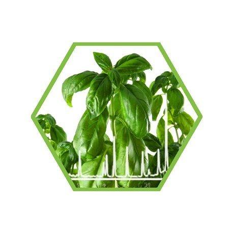 Dioxine in pflanzlichen Materialien (Lebensmittel)