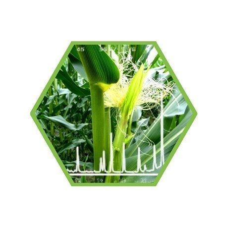 Dioxine in Futtermitteln oder pflanzlichen Materialien