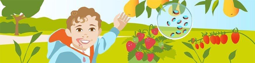Obst aus dem eigenen Garten