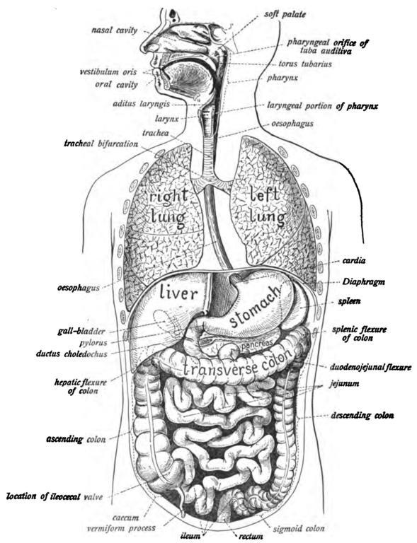 Formaldehyd im Körper von Säugetieren und Menschen