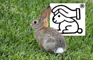 Tierversuche und Alternativmethoden