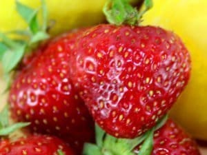 saftige Erdbeeren